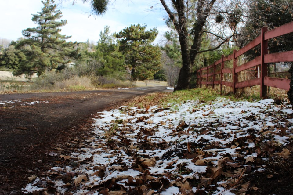 The first snowfall of the year in Julian, a small mining town one hour outside of San Diego.