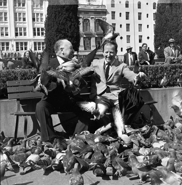 bodegabaythebirds
