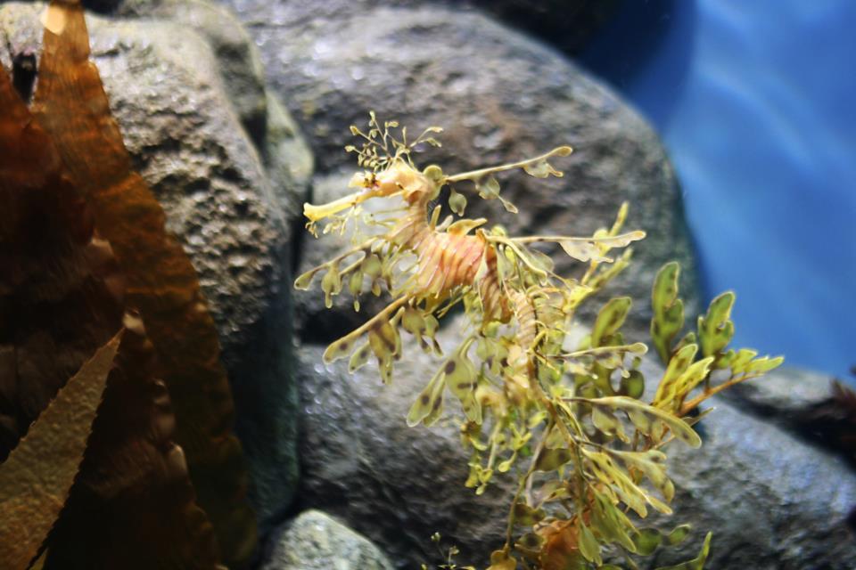monterey-bay=aquarium