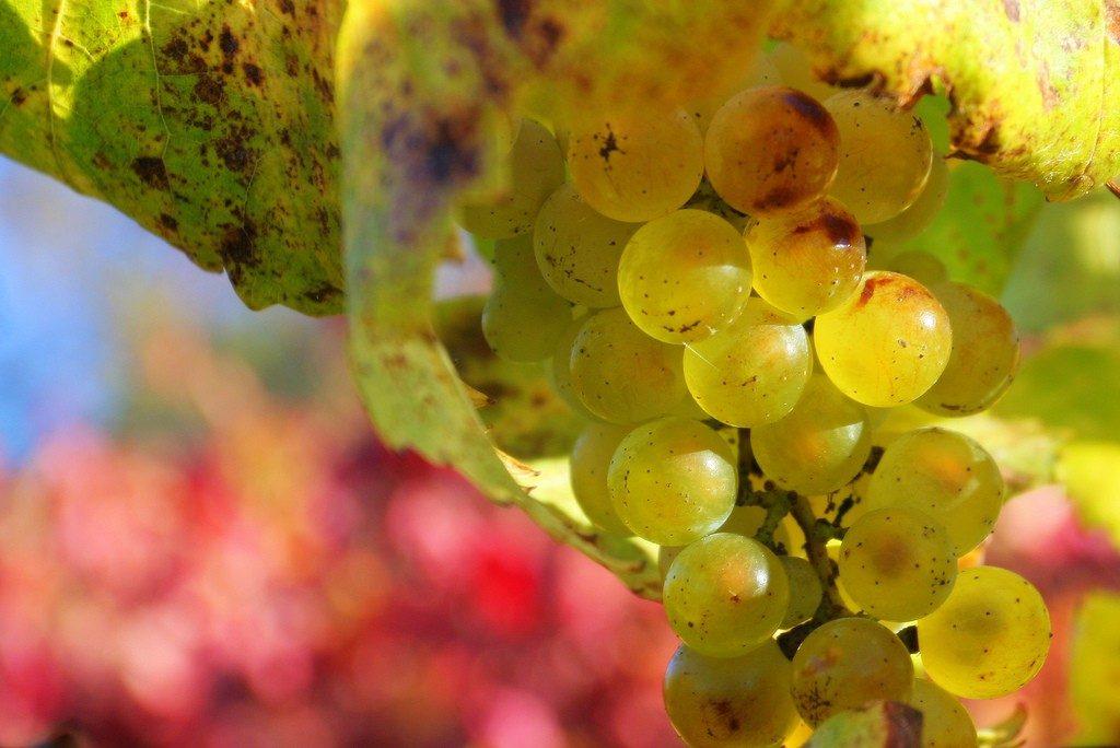 Wine Tasting ESL2